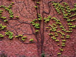 tree-of-life-1.jpg