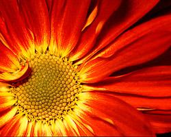 daisyfein.jpg